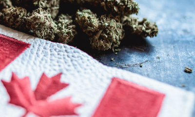 Top Weedmpas Alternative for Cannabis Dispensary Owner in Canada